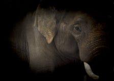 Elephant low key Royalty Free Stock Images