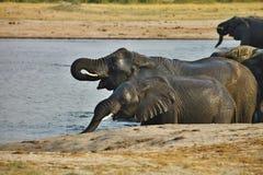 Elephant, Loxodonta africana, in Hwange National Park, Zimbabwe Stock Image