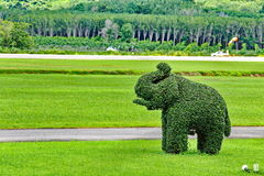 Elephant made by Bending wire tree, on green grass large field Royalty Free Stock Photography