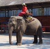 Elephant and Mahout Stock Images
