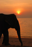 Elephant and mahout on the beach Royalty Free Stock Image