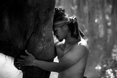 Elephant and mahout are friends in wilde lifestye. Of people and elephant in Thailand Royalty Free Stock Photos