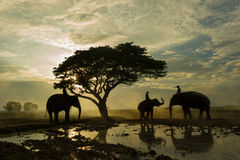 Elephant and mahout gther under big tree Stock Photos