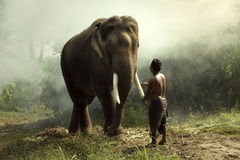 Elephant with mahout Royalty Free Stock Photo