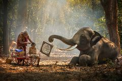 Free Elephant Mahout Portrait. Grandfather Was Cutting His Nephew With An Elephant Holding A Mirror. Vintage Style. The Activities At Stock Photography - 156175892