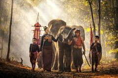 Free Elephant Mahout Portrait. Wild Elephant Ritual Ceremony Of Surin People. The Kuy Kui People Of Thailand. The Mahout And The Royalty Free Stock Image - 155840656