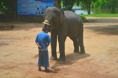 Elephant And Mahout In The Shows stock photography