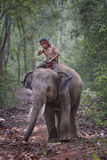 Elephant and mahout Stock Image