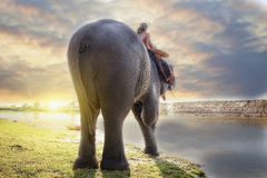 Elephant and mahout Royalty Free Stock Photography