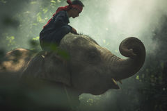 Elephant with mahout in wildlife Stock Images