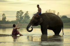 Elephant Mahout women and men are taking a bath in the river dur Royalty Free Stock Photos