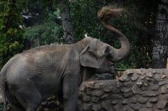 Elephant. Marta Elephant throws sand itself in zoo Palic,Subotica,Serbia,02.08.2015 stock images