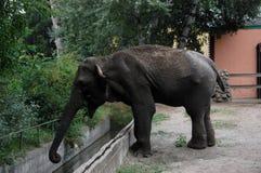 Elephant. Marta Elephant throws sand itself in zoo Palic,Subotica,Serbia,02.08.2015 stock image