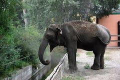 Elephant. Marta Elephant throws sand itself in zoo Palic,Subotica,Serbia,02.08.2015 royalty free stock image