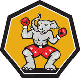 Elephant Mascot Boxer Cartoon Stock Images