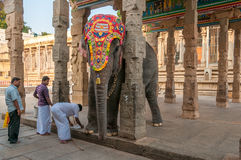 Elephant of Meenakshi Temple Royalty Free Stock Photos