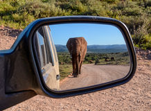Elephant in a mirror. An Elephant walking down a road in Southern Africa reflected in a car mirror Stock Photos