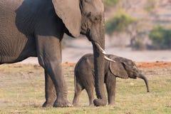 Elephant modeling Stock Images