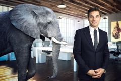 Elephant in the room stock images