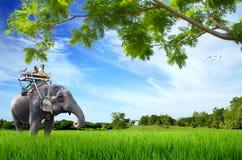 Elephant with monkey Royalty Free Stock Images