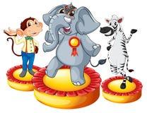 Elephant monkey zebra Royalty Free Stock Images