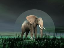 Elephant by moonlight Royalty Free Stock Photos