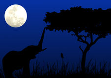 Elephant in moonlight. Elephant reaching for a bite in moonlight Royalty Free Stock Photos