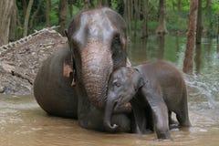 Elephant mother Stock Photos