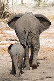 Elephant mother Stock Photography