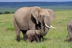 Elephant mother with baby, Kenya Stock Images
