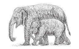 Elephant mother and baby walking beside, asia species sketch. And free hand draw vector illustration Stock Photos