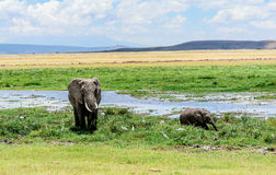 Elephant mother with calf in Kenya, Africa Royalty Free Stock Photo