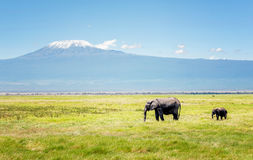 Elephant mother with calf in Kenya, Africa Stock Photography
