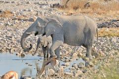 Elephant mother and calf at Okaukeujo Royalty Free Stock Photography