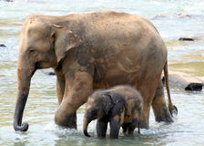 Elephant Mother and Child Stock Images