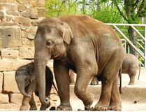 Elephant, mother and child. Royalty Free Stock Images