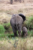 Elephant mother takes baby to the water pond Stock Photography