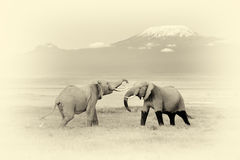 Elephant with Mount Kilimanjaro. Vintage effect Stock Image