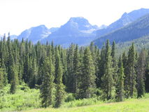 Elephant Mountain. Gallatin Range, Elephant Mountain sits in the background of a stand of pine trees stock image