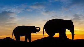 Elephant on mountain evening time Stock Photo