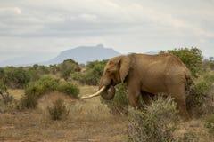The Elephant & The Mountain. Photo from a Safari in Tsavo East National Park, Kenya Stock Photo
