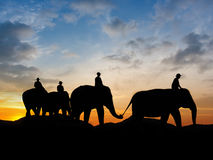 Elephant at mountain on twilight Royalty Free Stock Photography