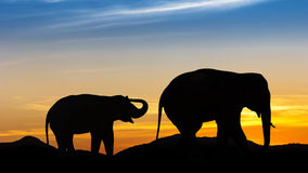 Elephant on mountain Stock Photo