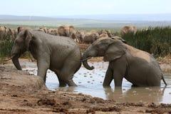 Elephant Mud Bath Stock Photos