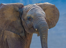 Elephant mud bath Royalty Free Stock Photography