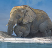 Elephant mud bath Royalty Free Stock Photos