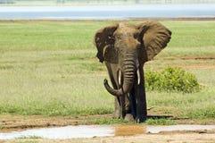 Elephant Mud shower Stock Photos