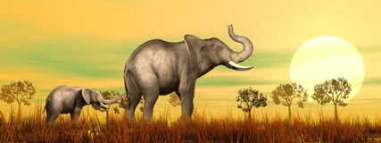 Elephant mum and baby in the savannah - 3D render. Baby elephant holding mum's queue in the savannah by sunset Stock Photos