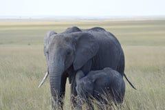 Elephant Mum. A female elephant with her calf Stock Photos
