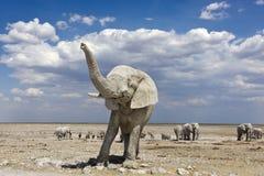 Elephant namibia trunk Royalty Free Stock Image